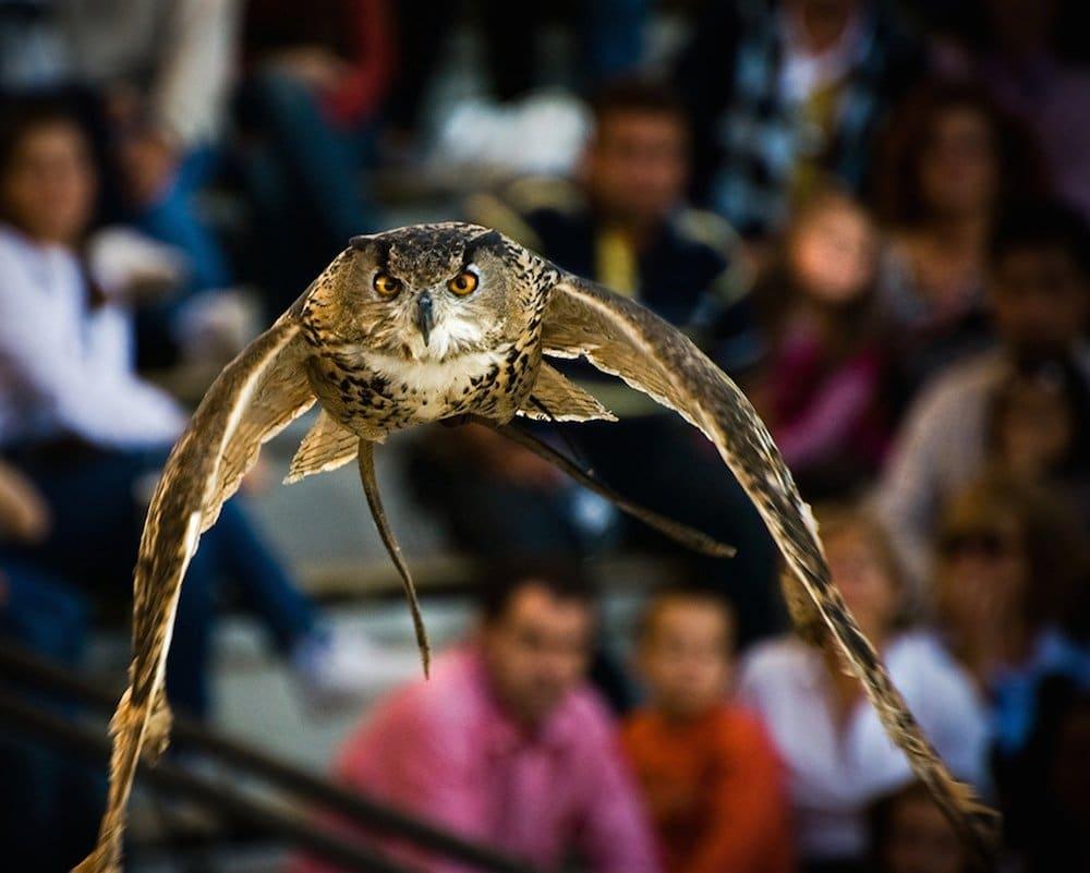Dónde ver animales en semilibertad en España