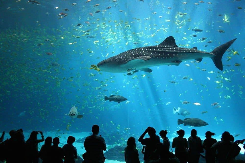 los mejores acuarios del mundo