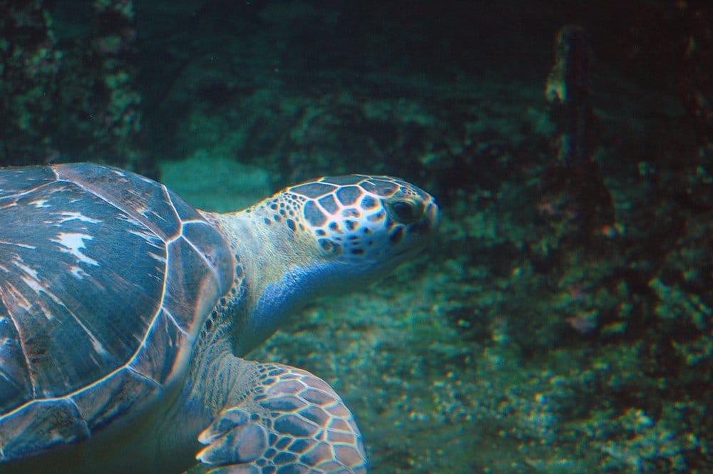 Aquarium de Genova