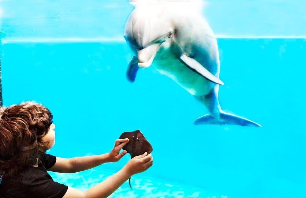 Aquarium del mundo