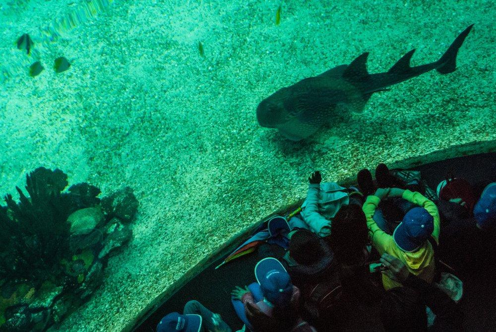 Aquarium Lisboa