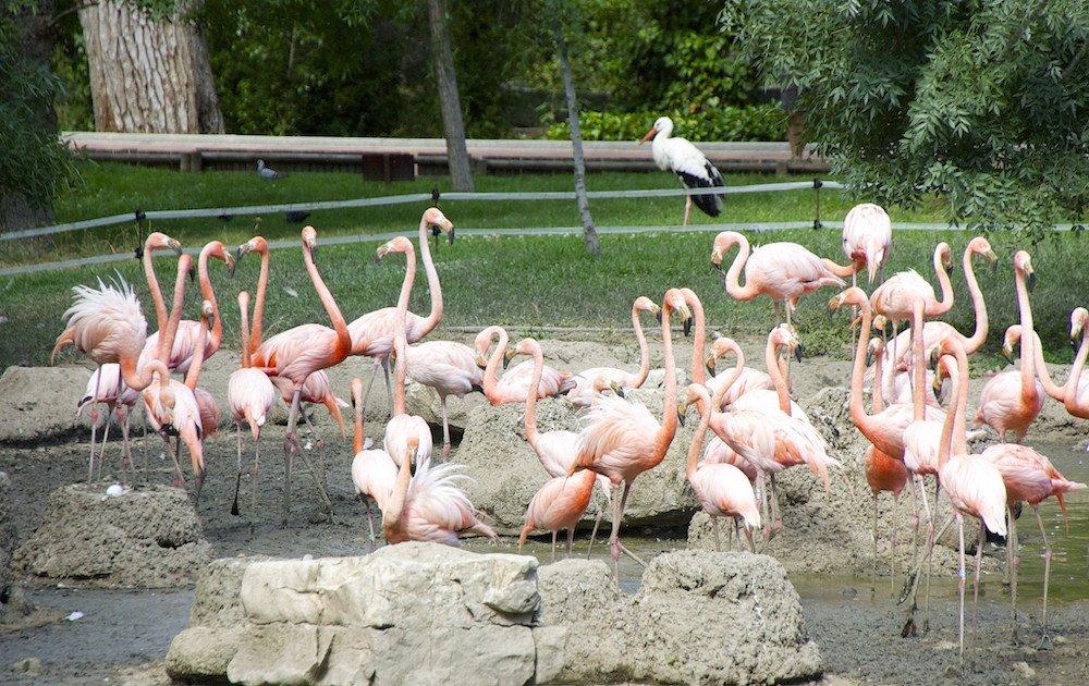 Zoo de Madrid entradas