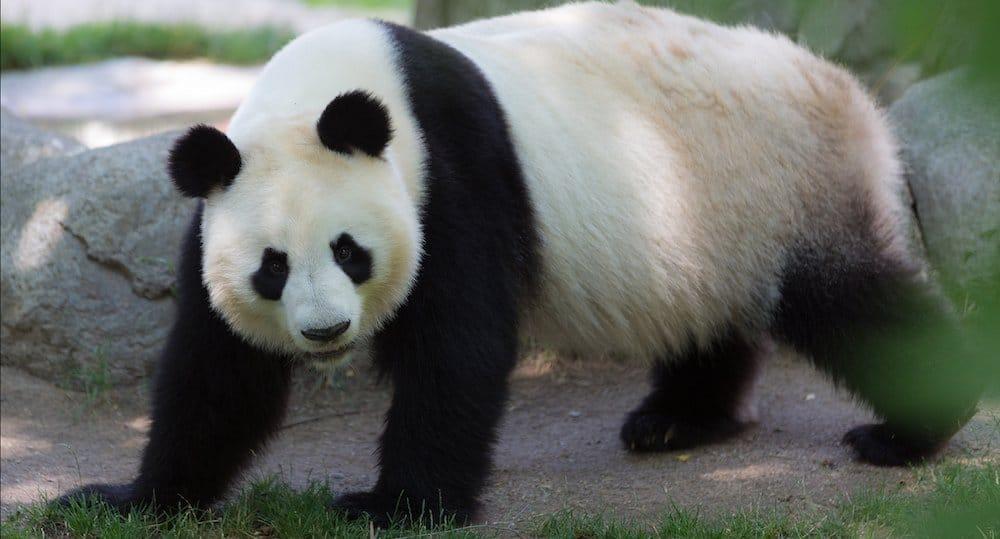 Zoo De Madrid Lo Que Tienes Que Saber Antes De Ir Pequeviajes
