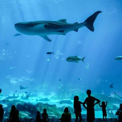acuario de georgia Estados Unidos